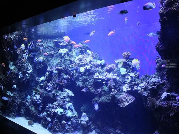 水槽に生息する魚