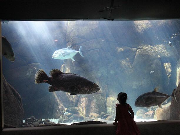 魚と海底の大地