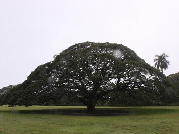 この木なんの木♪のCMで有名モアナルアガーデンの大きな木