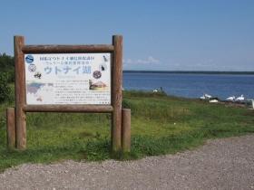 渡り鳥が湖で過ごしているウトナイ湖