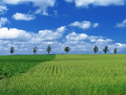 丘からの風景・緑と青空