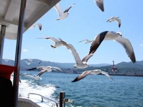 船の周りを飛び交うカモメたち