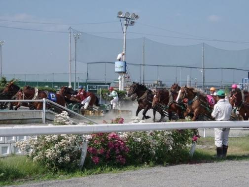 馬たちの光景
