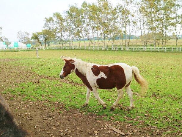 かわいい子馬