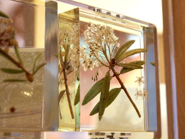 透明の樹脂に封じ込めた動植物