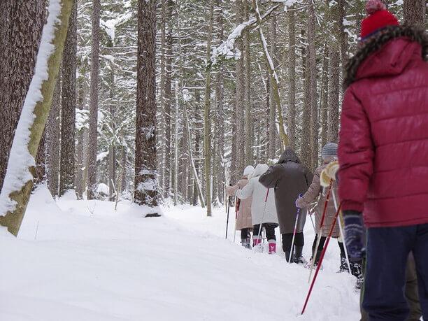 スノシューで雪に包まれた森を散策