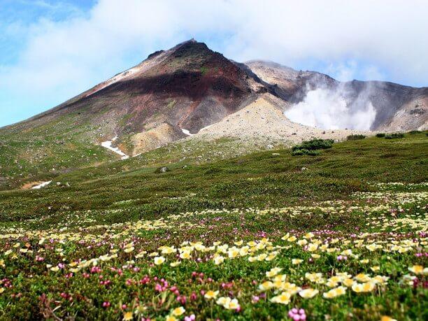 旭岳と高山植物