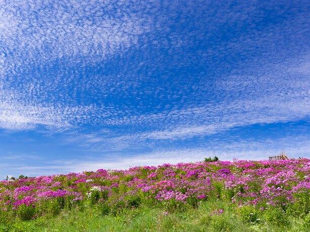 風が吹き抜ける北海道の丘の風景