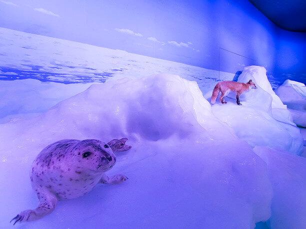 流氷の上にはかわいいキタキツネやアザラシ