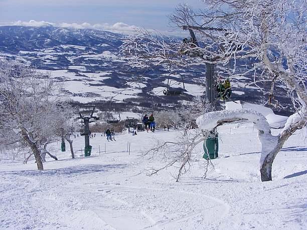 降雪の翌日は最高のパウダースノー
