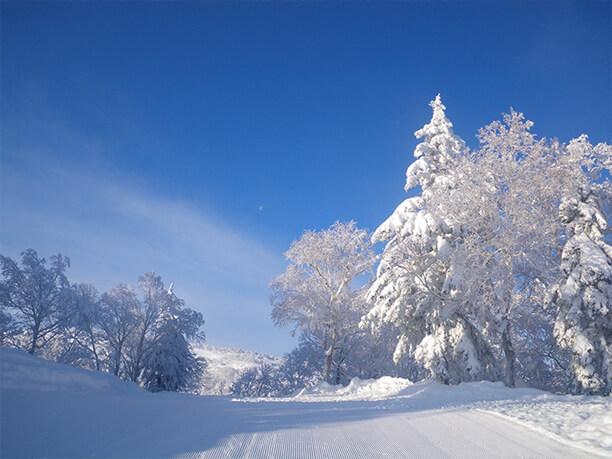 雪化粧した木々達