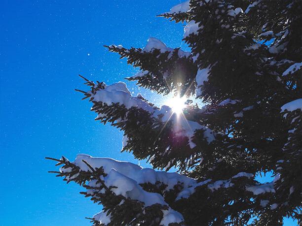 雪の積もった木