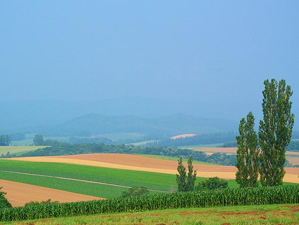 北海道の草原
