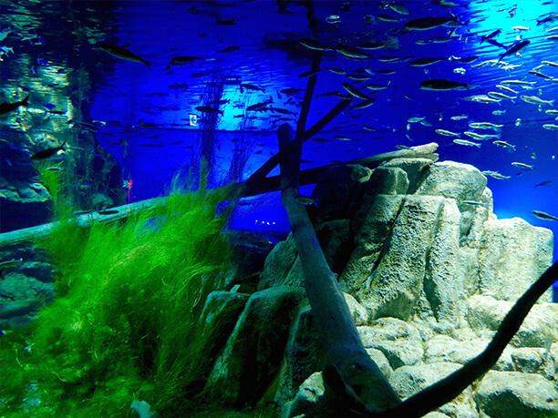新千歳空港から車で約10分!サケの遡上も見れる千歳水族館