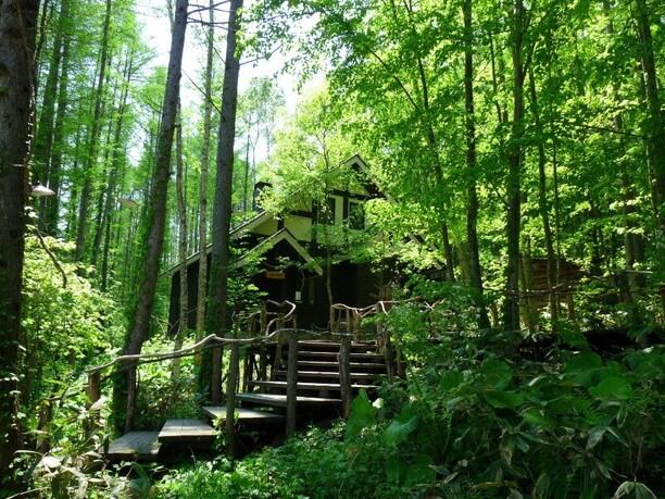 森の中にあるカフェ
