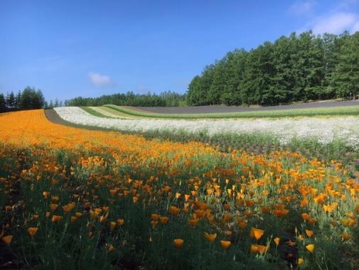 一面の花畑