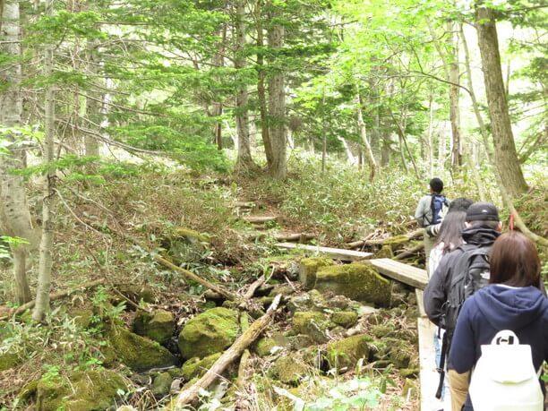 大自然を感じられる森