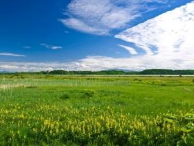 見渡す限りの草原
