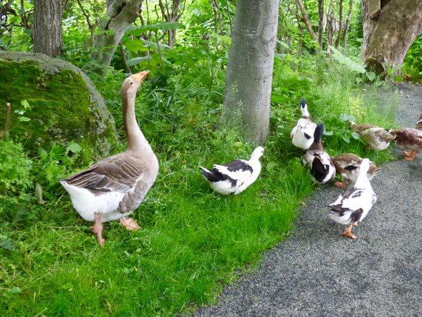 お散歩中の鳥たち