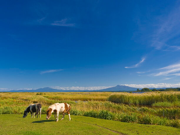 美しい草原