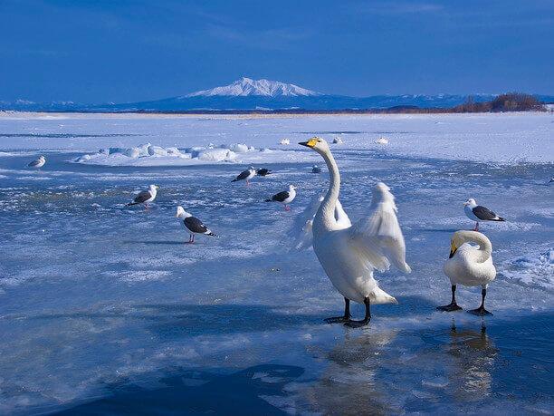 水鳥と流氷