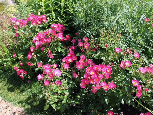 小さくかわいい花もたくさん