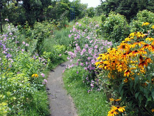 小道に咲く花々