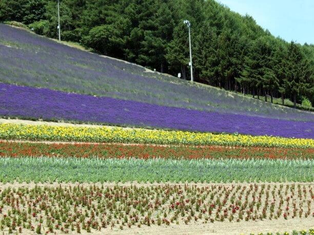 色とりどりの花々