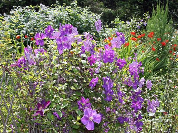 大きな紫の花