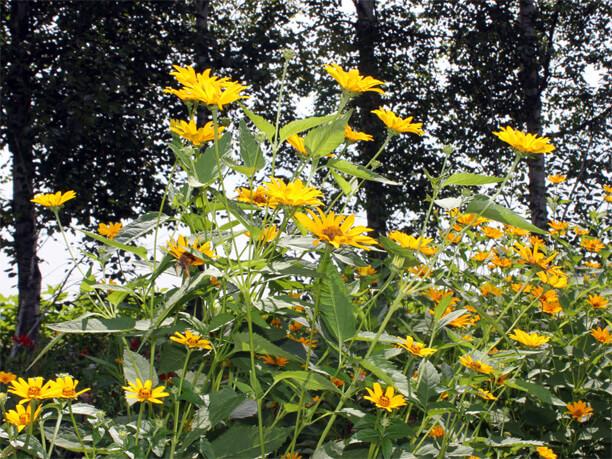 咲き誇る花々