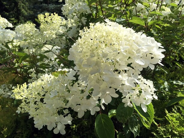 ドワーフガーデンに咲く花