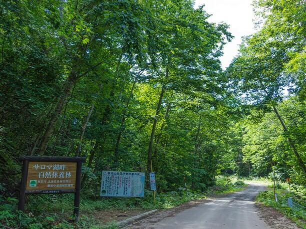 サロマ湖畔自然休養林