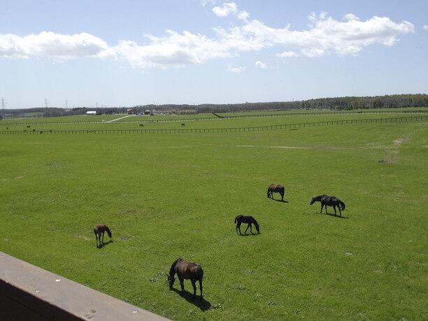 広い放牧地