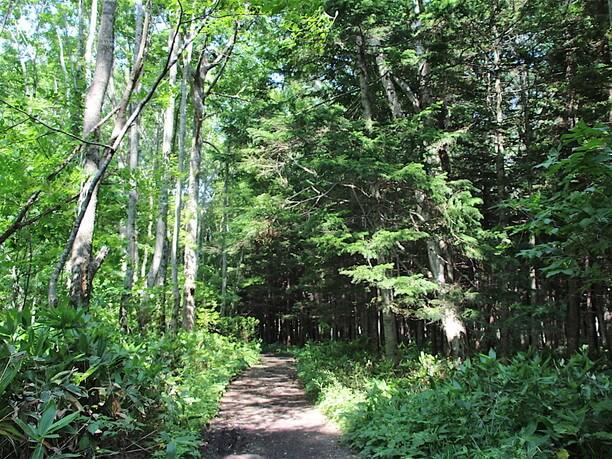 野幌森林公園内