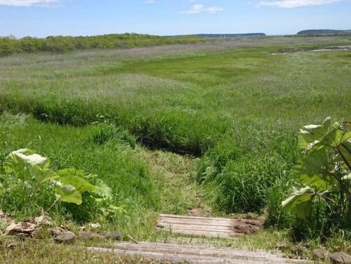 湿原への道