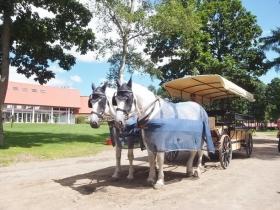 大型種の馬
