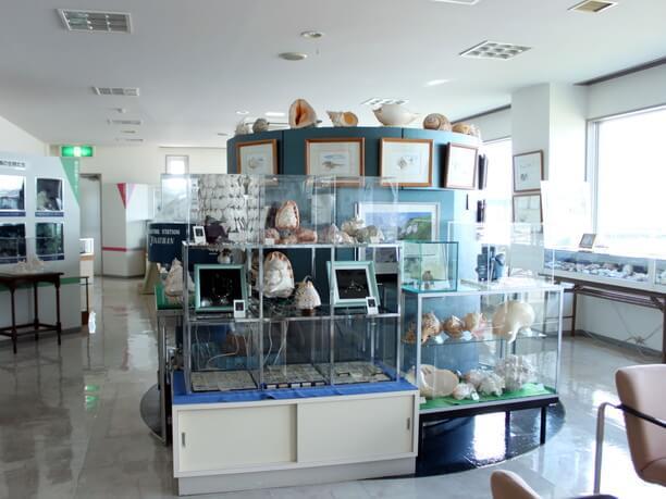 港の貝の博物館