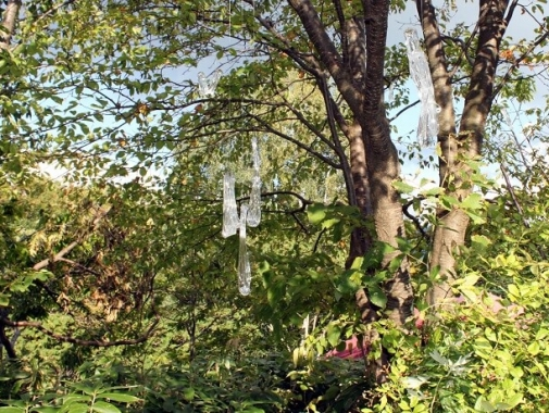 木に吊るされたガラスのオブジェ