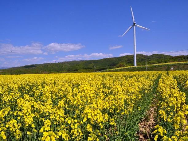 高さ36メートルの風車
