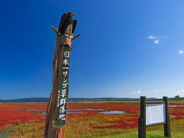 日本一サンゴ草群落地