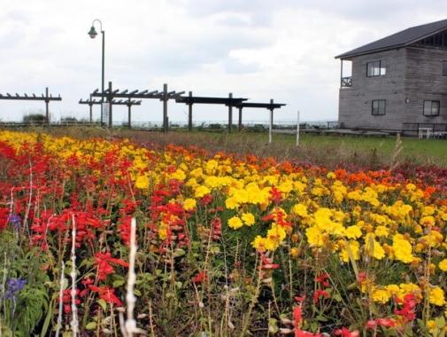 佐藤さん一家と地域の皆さんが心を込めて育てた花々