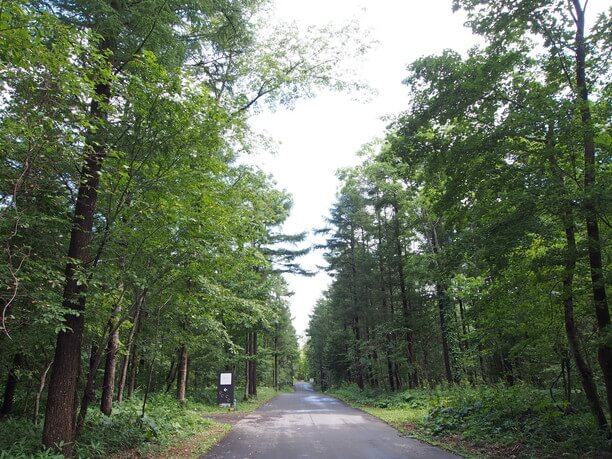 緑深い森林のなかにたたずむ