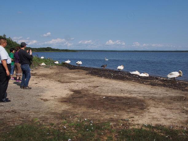 「野鳥の楽園」で有名なウトナイ湖