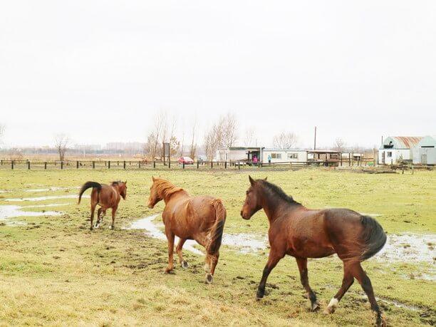 1列に並んで走る馬たち