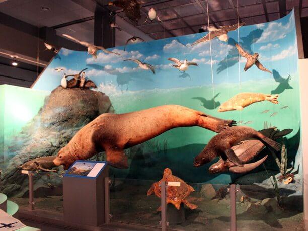 空や海の生き物を展示