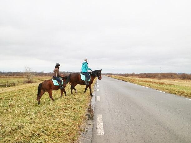 のんびり馬と散歩