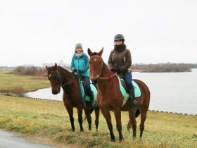馬と大自然