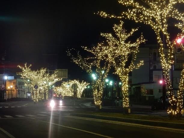 綺麗に輝く路の木々