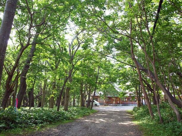 アーチのように囲んでいる木々