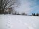 新雪についた足跡